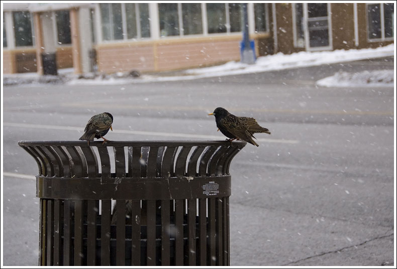Garbage Can Birds